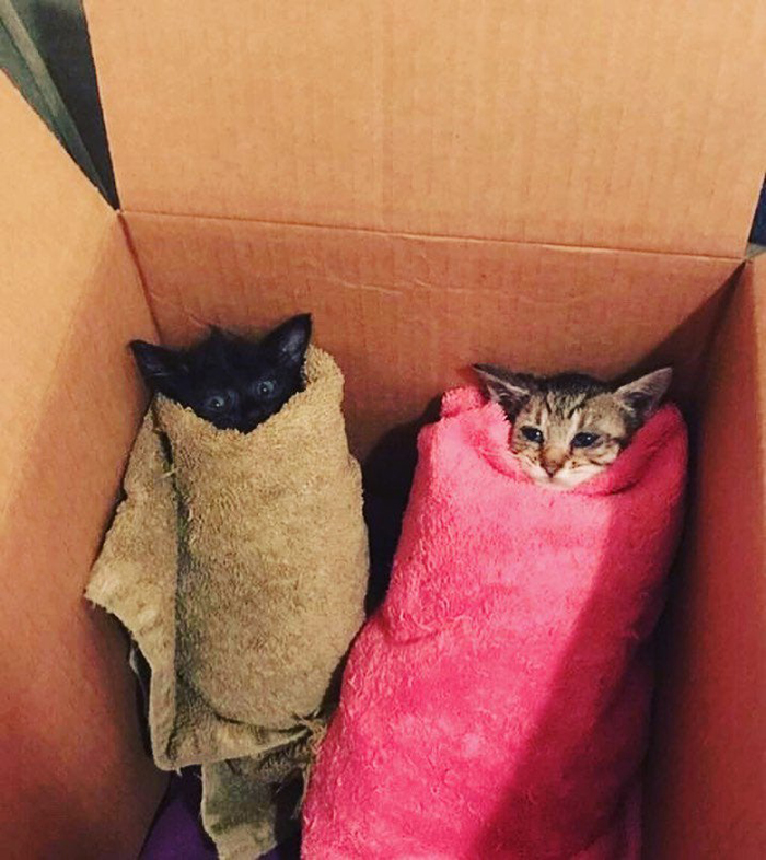 pet kittens wrapped in towels