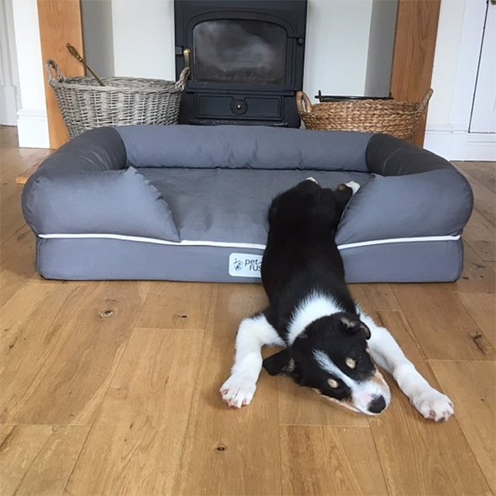 puppies sleeping funny legs on bed