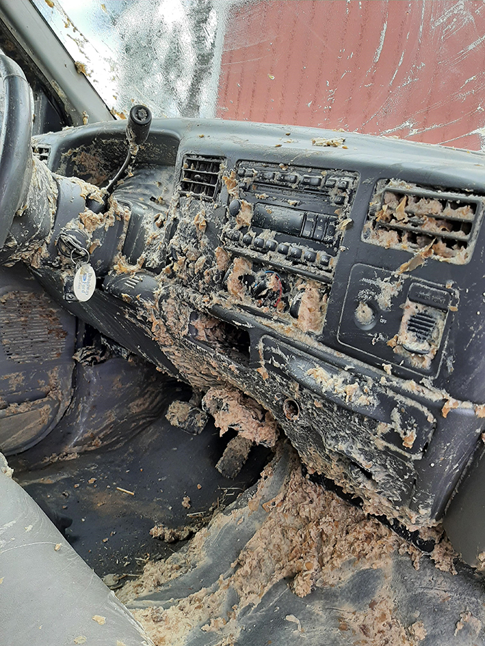 things gone wrong rotten potato slurry mess in truck front seat