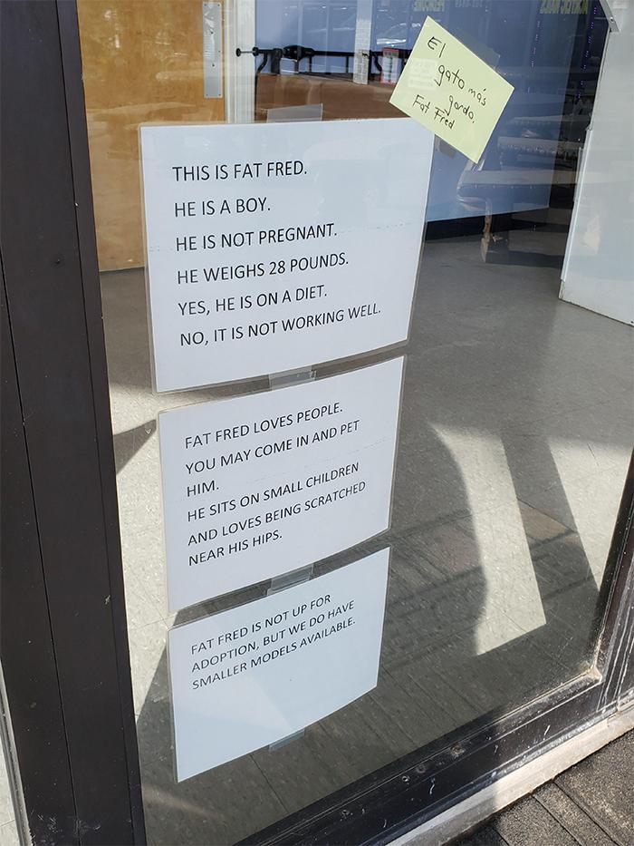 vet clinic sign overweight cat