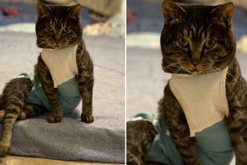 Rescue Cat posing