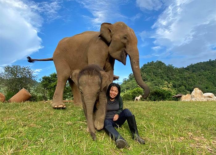 baby elephant chaba and mom bunma with caretaker
