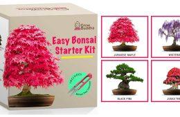 bonsai tree kit