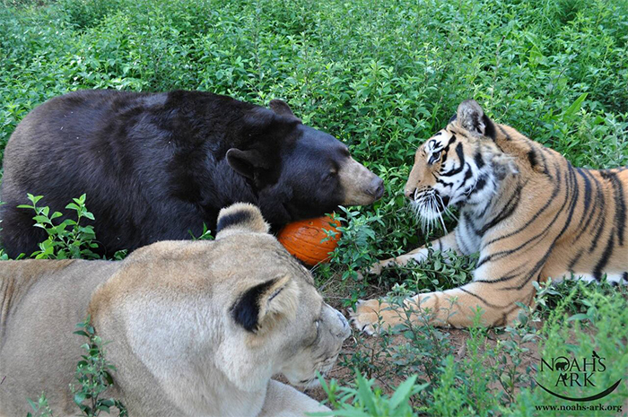 rescued animals unlikely friendship