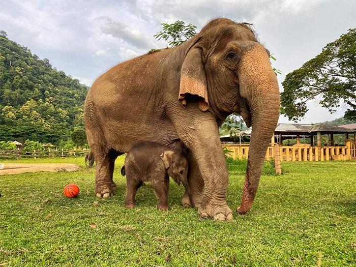 thailand chaba and nanny sri nuan