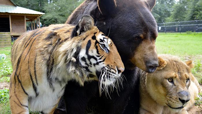 unlikely animal friendship